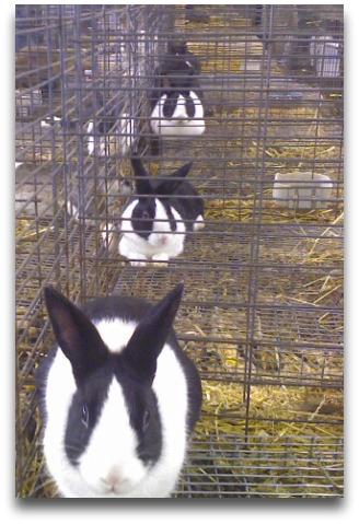 rabbit, rabbit, rabbit