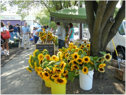 worthington farmers market sunflowers