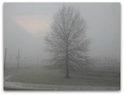 Oak tree Delaware County