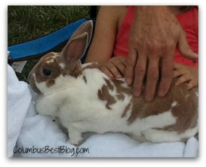 Buffy the bunny from Buns of Fun Rabbitry