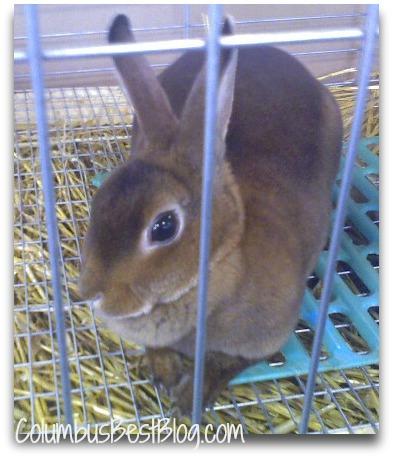 Rabbit at the Ohio State Fair