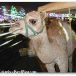 camel at Columbus Commons Holiday Fair 2012