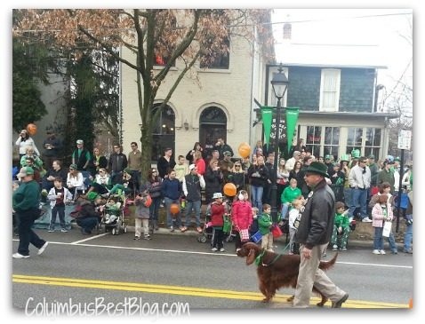 Irish Setter in the Dublin parade