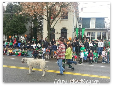 Wolfhound in the Dublin 2013 St. Patrick's Day Parade
